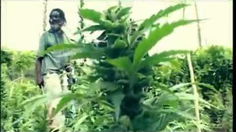 Israel Vibration - Herb Is The Healing