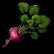 Red Turnip