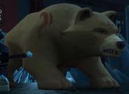 Kataru bear