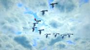 MoS40Seagulls