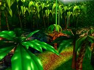 Selva Kongo 2