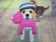 Cocker Spaniel with stuffed dog