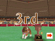 Agility - 3rd place master