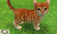 Tabby red