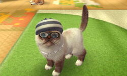 3DS pictures 1519.jpg