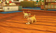 -Nintendogs Cats- 014