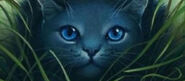 Mainpage-warriorcats