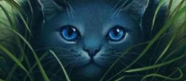 Uitgelichte wiki: Warrior Cats wiki