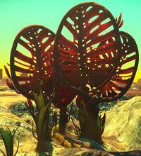 Devil's Fan.jpg