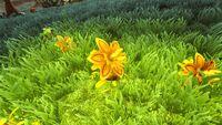 Phariaflower.jpg