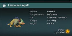 Leisiaiaea Apelt - Female.jpg