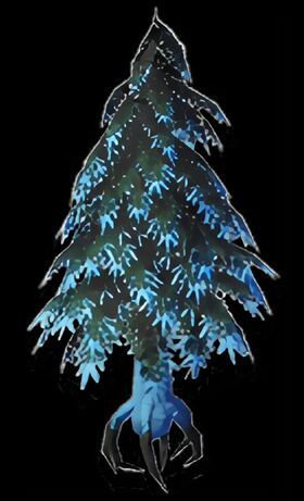 Ancient Conifer