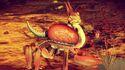 Asornisu Naxifrico.jpg