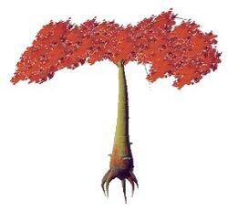 Xogonus nicarabatea.jpg