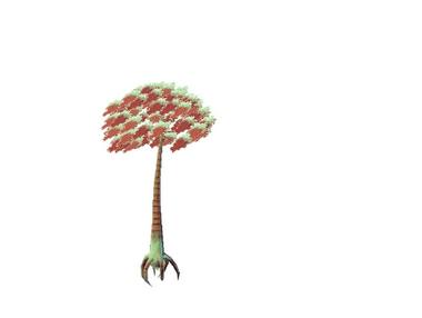 Plant cognoe stallatus.png