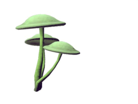 Plant emblae synoxileum.png