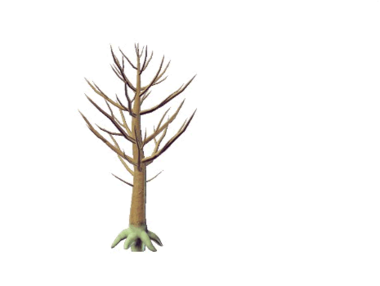 Plant rufatium rutaldoorae.png