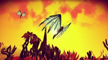 Serenity Fly (Obgrua Nisequuskra)