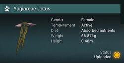 Yugiareae Uctus - Female.jpg