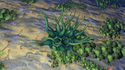 New Lennon T. Bindruxium (Tentacle Lotus).png