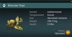 Ibisciae Oopi - Indeterminate.jpg