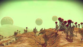 Planet Reococcyx