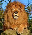 FA-Lion
