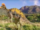 Corythosaurus (Jurassic Park)