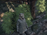 Wolfe grows weed