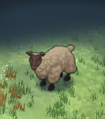Sheep Icon.png