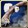 Is eaglessplendor.png