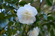 Flower-610702 1920