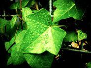 Foliage-384681 1920