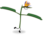 Crane Flower (Old)