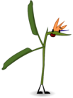 Crane Flower (EP5)