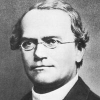 Gregor Mendel.jpg