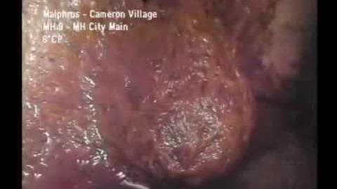 Bizzare Creature Found In North Carolina Sewer