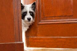 Doordog.jpg
