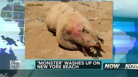 "New_""Montauk_Monster""_Washes_Up_On_New_York_Beach"