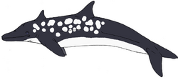 Dolphin3.png