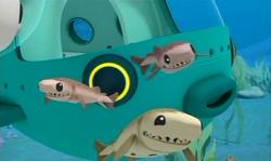 The Cookiecutter Sharks.png