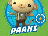Paani the Monkey