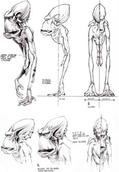 Glukkon anatomy concept