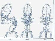 Vykker Anatomy