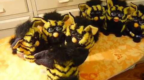 Bumble Bee Furby's chatting (video by Anush Yaranushian)