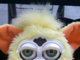 Furby Models Not Yet Verified