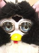 Furby coobie face
