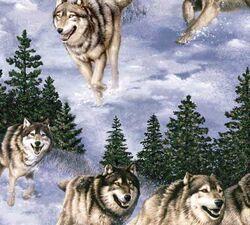 Vip wolves running 4x4.jpg