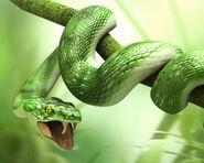 3d animals - Snake