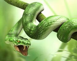 3d animals - Snake.jpg
